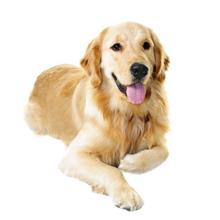 Dog Day Care - Overnight Dog