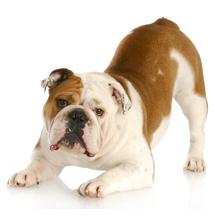 Dog Day Care - Pet Training