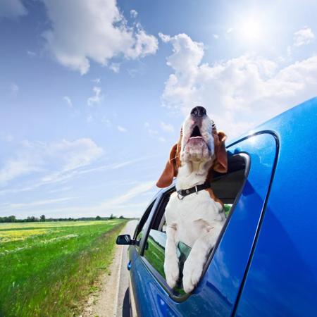 Dog Day Care - Pet Transportation
