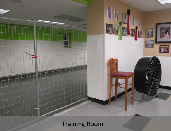 Doggy Day Care - Gallery 4