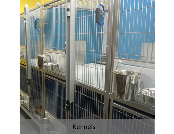 Doggy Day Care - Gallery 7