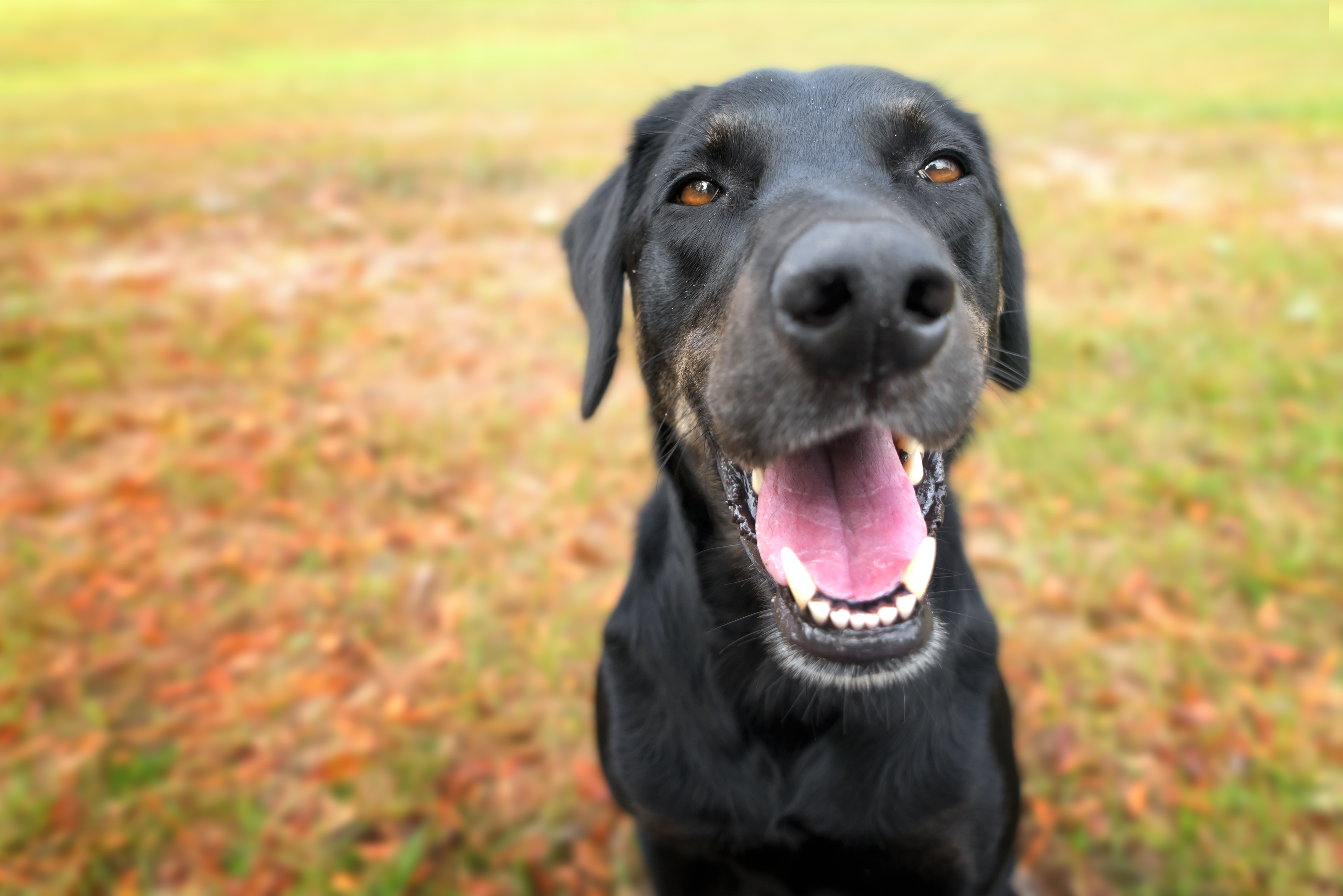 Local Dog Kennels - Woofs and Wags