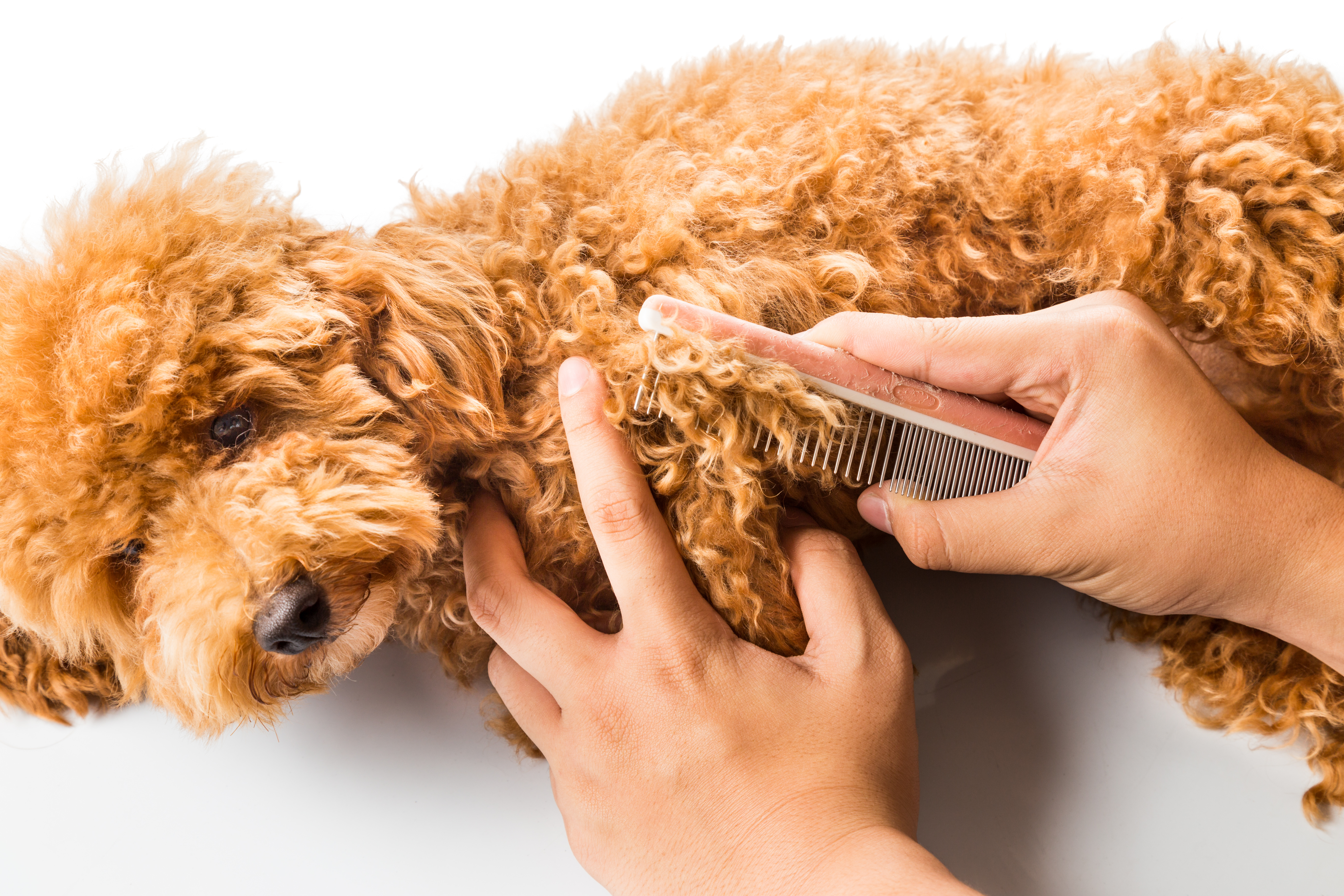 Dog Grooming Guide Bridge
