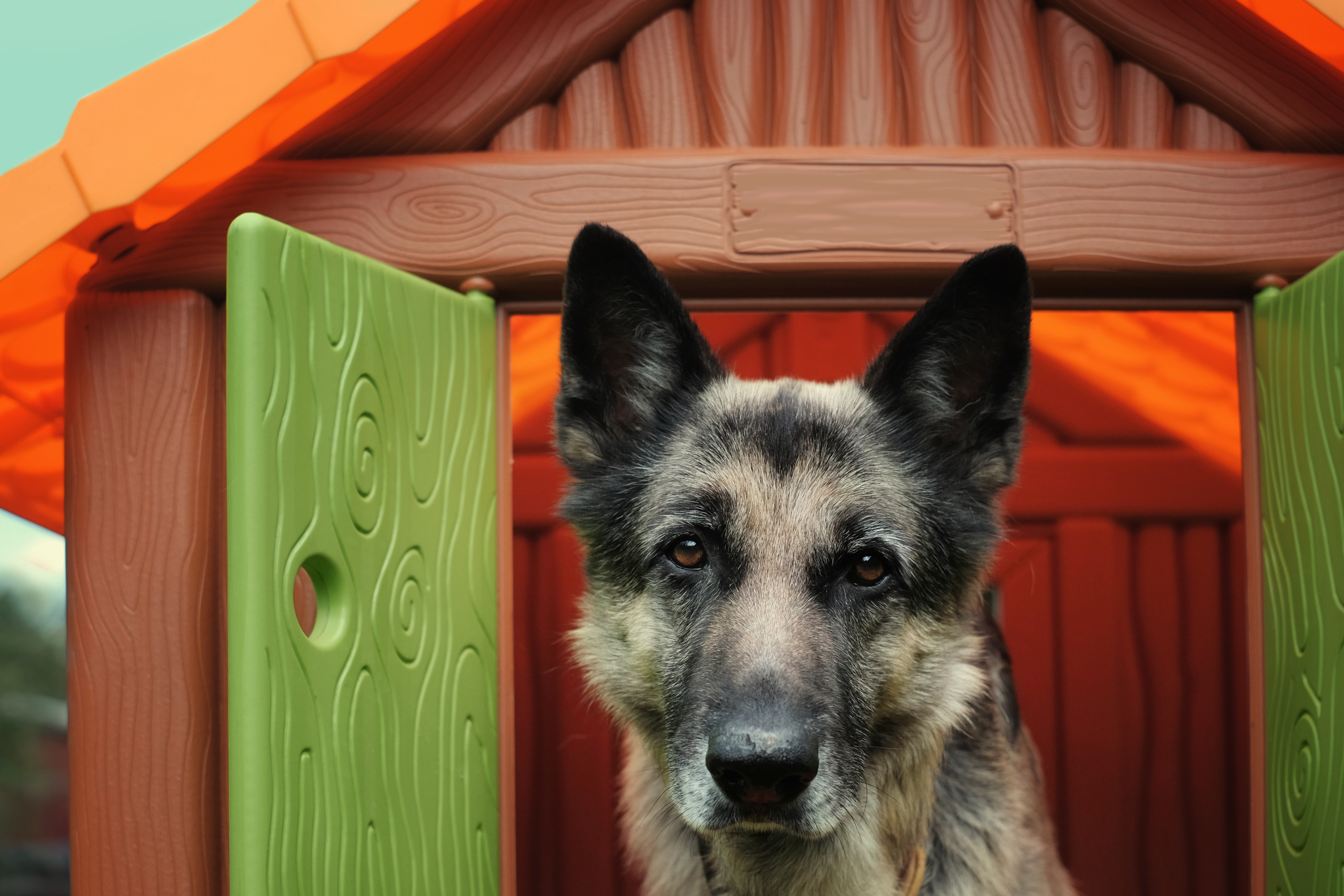 dog kennels in Maryland-Woofs