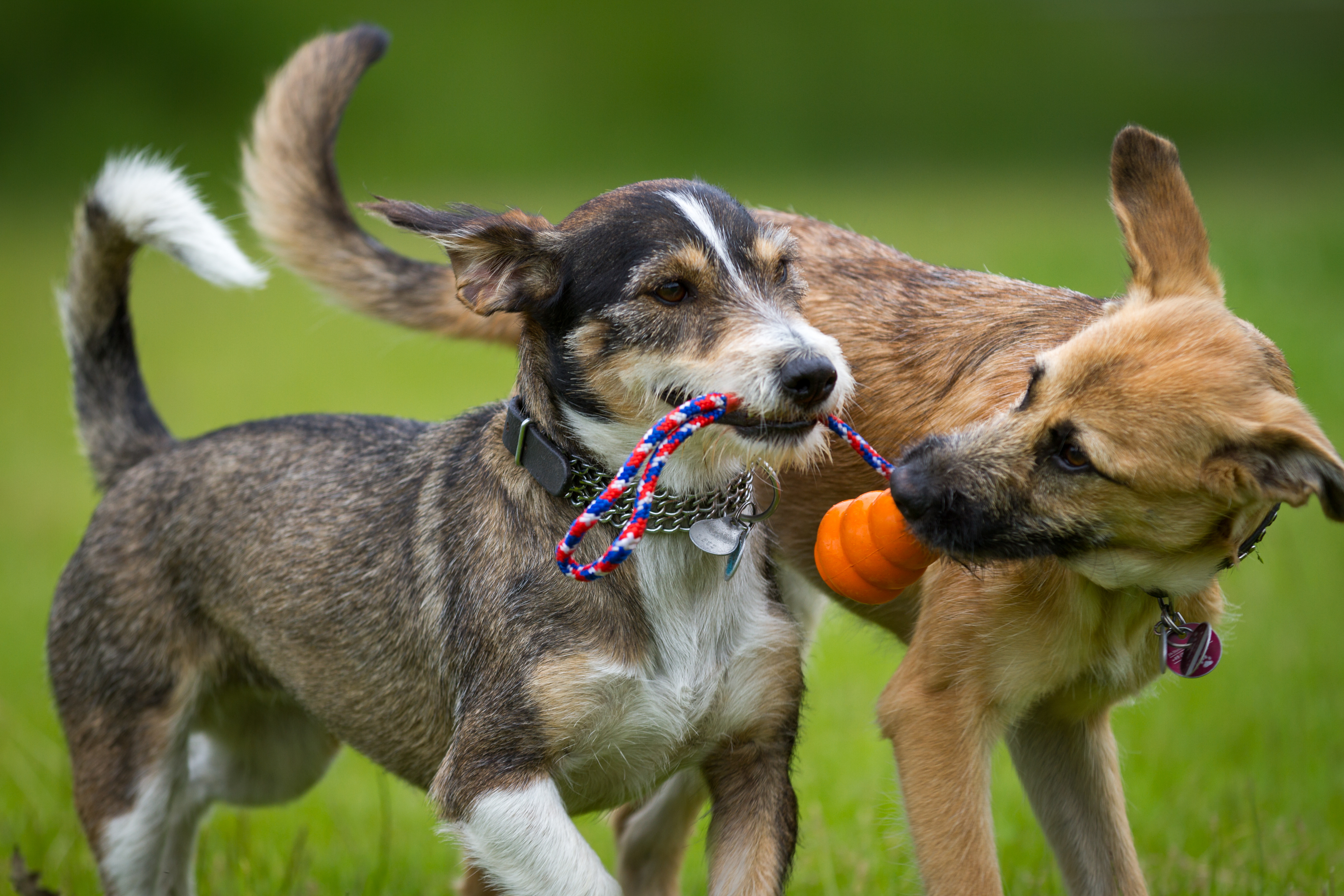 good doggie daycare in baltimore - Woofs and wags