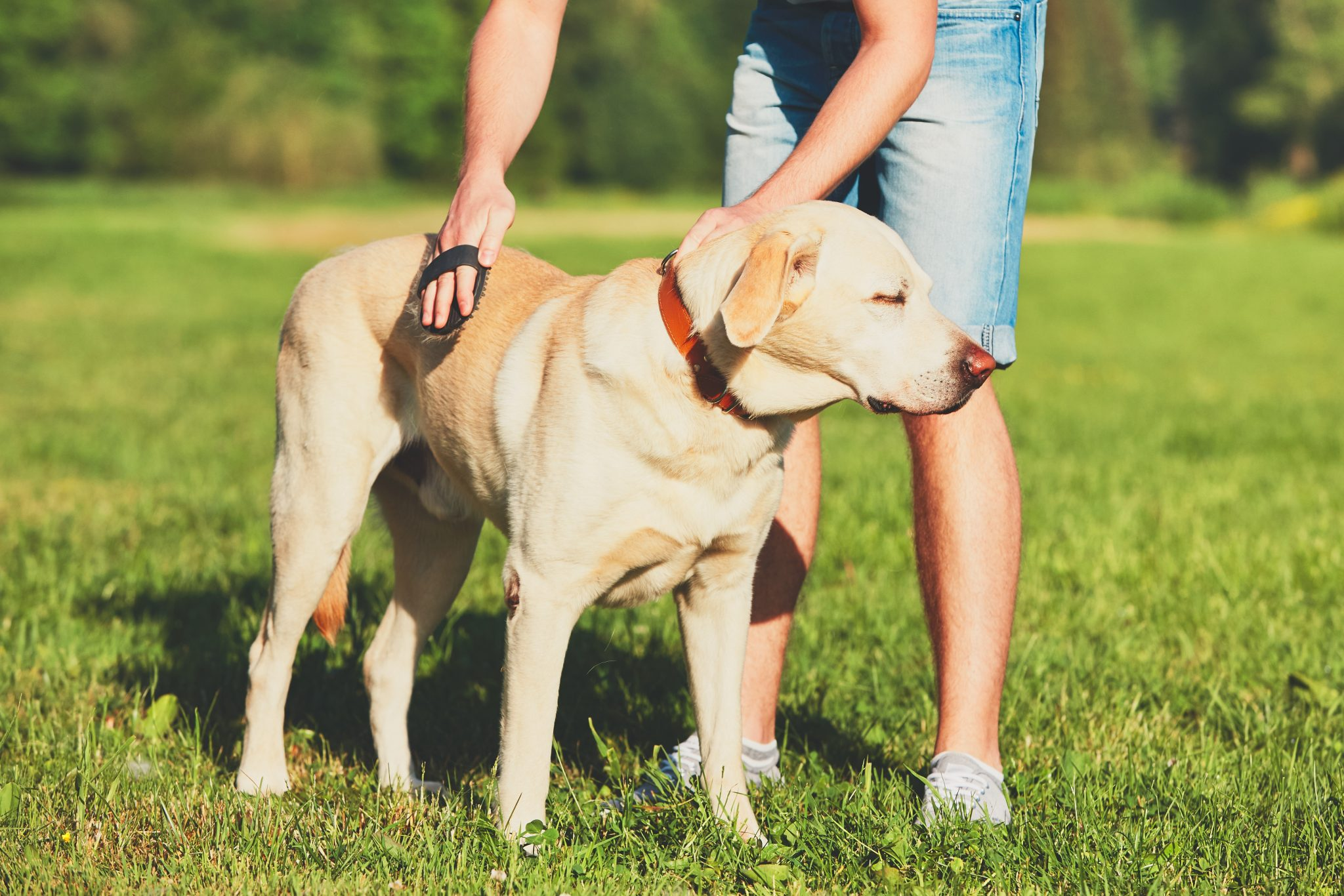 pet grooming in Baltimore MD - Woofs & Wags