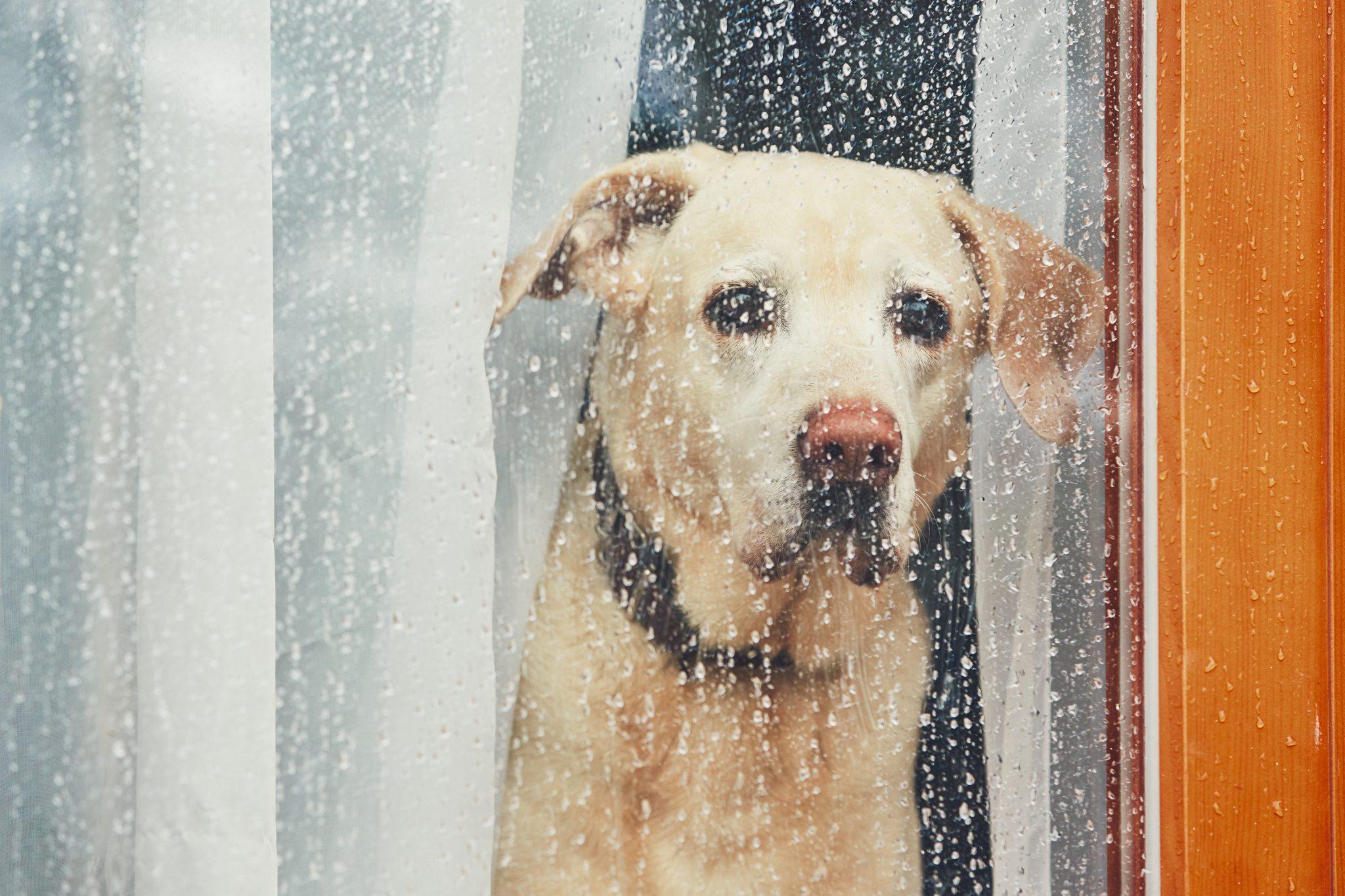 dog boarding kennels - Woofs & Wags
