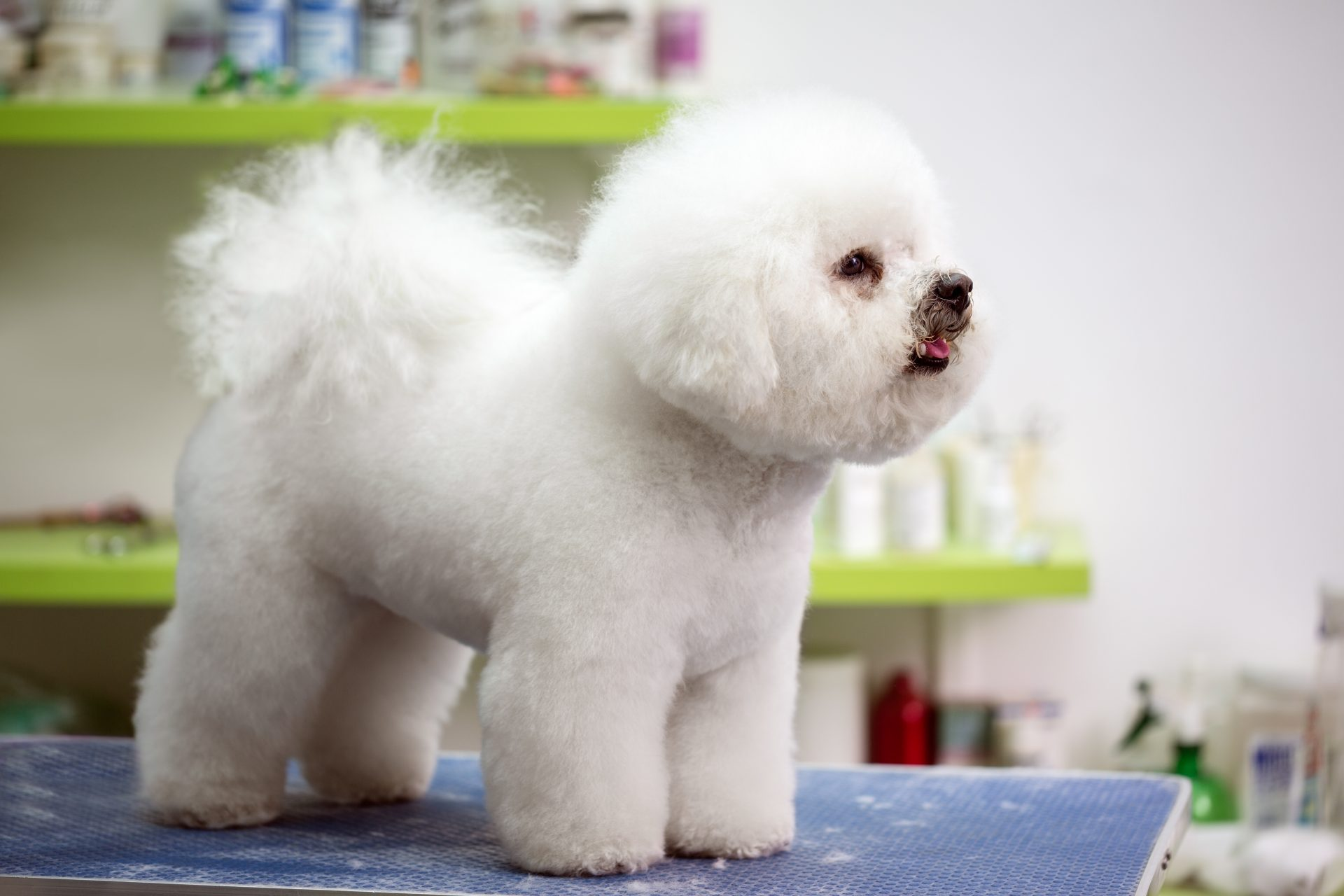pet grooming Baltimore - Woofs & Wags