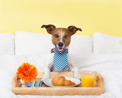 dog boarding - Woofs & Wags
