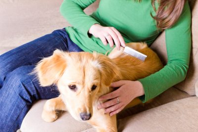 pet grooming in Baltimore - Woofs & Wags