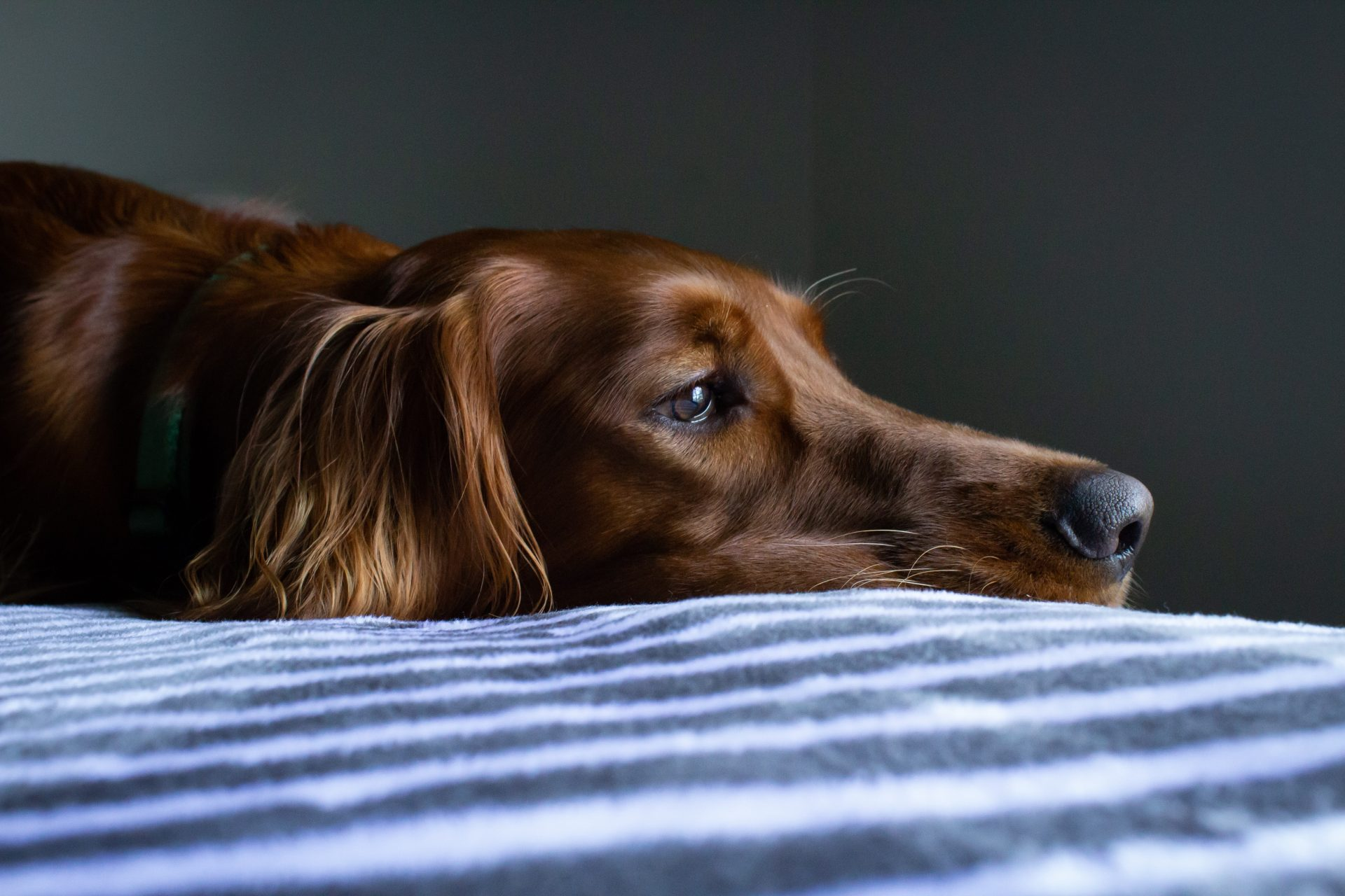 doggy daycare near me - Woofs & Wags