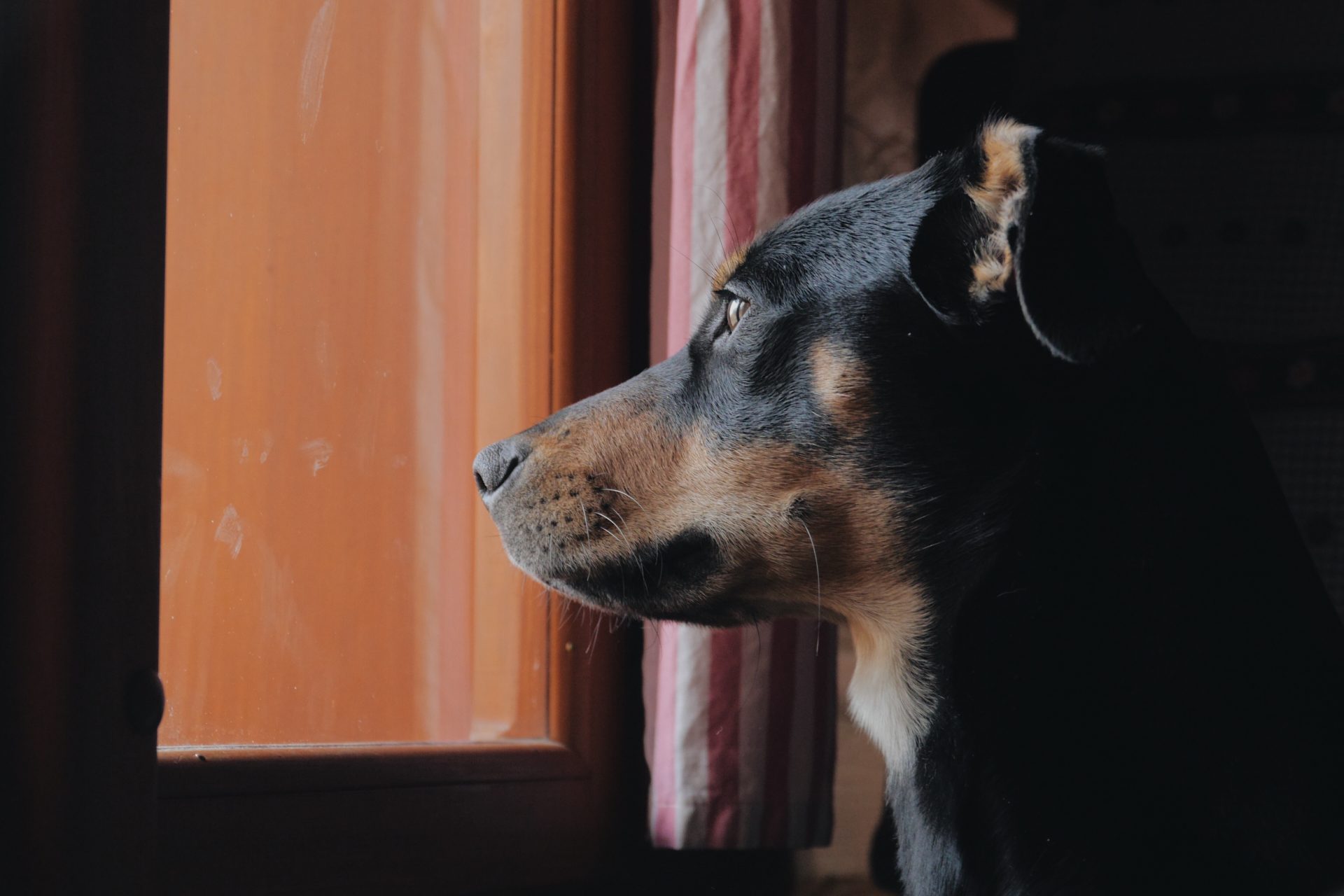 dog boarding Maryland - Woofs & Wags