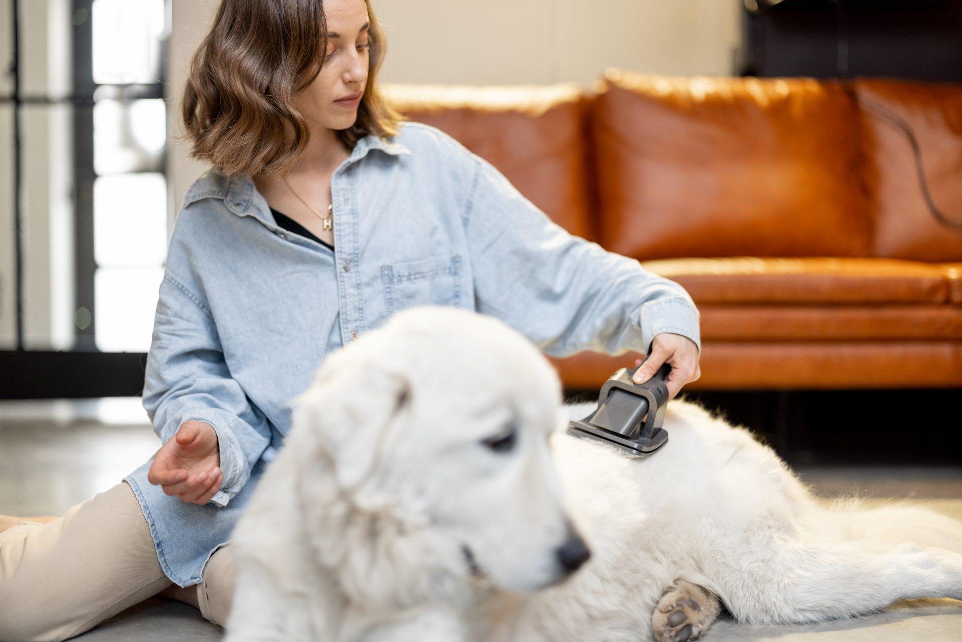 local dog groomers - Woofs & Wags