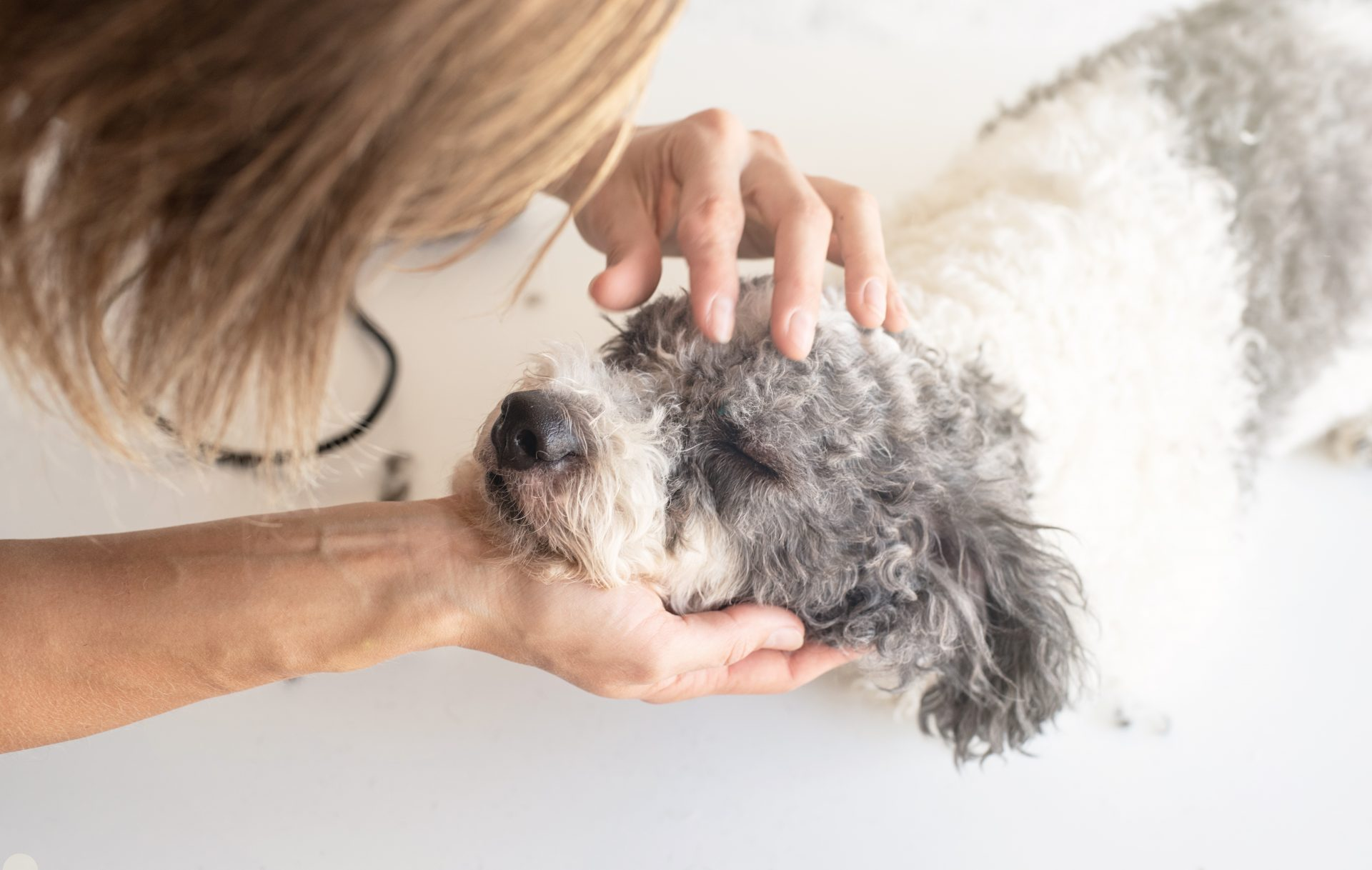 pet grooming baltimore md - Woofs & Wags